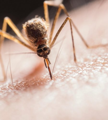 disinfestazione-zanzare2